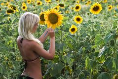 The blond girl painting the sunflower Stock Photography