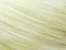 Blond haar als textuurachtergrond Royalty-vrije Stock Foto's