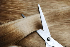 Blond Hair. Long healthy blond hair and professional scissors Stock Photo