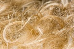 Blond hair royalty free stock image