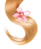 Blond Hair with flower isolated on white Royalty Free Stock Photo