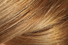Blond hair, macro shot Stock Images