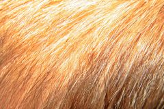 Blond hair of my child Stock Photography