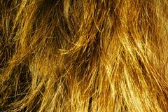 Blond Hair Texture Stock Photos