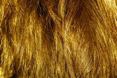 Blond Hair Texture Stock Photography