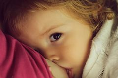 Blond hazel-eyed baby given breast. Baby fair-haired blond hazel-eyed given breast milk breastfeeding cute portrait on motherhood background, horizontal picture stock photos