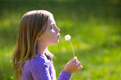 Blond kid girl blowing dandelion flower in green meadow Royalty Free Stock Photography