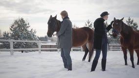 Blond kobieta i mężczyzna prowadzi dwa brązu konia przy śnieżnym zima rancho Jeden zwierzę zatrzymywał i chce iść dalej Szczęśliw zdjęcie wideo
