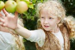 Blond meisje die appelen opnemen stock afbeeldingen