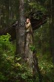 Blond meisje in een magisch bos Stock Foto's