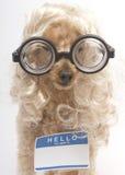 Blond Nerd med mellanrumsnamnetiketten royaltyfri fotografi