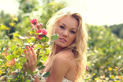 Blond and rose Royalty Free Stock Images