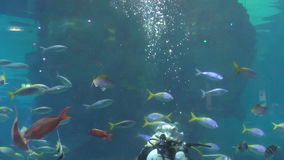 Blond woman diver in aquarium with fish stock video footage