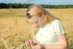 Blond woman in field. Portrait of beautiful young blond woman in golden wheat field Stock Images
