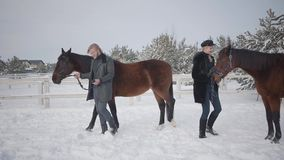 Blond woman and tall man leading two brown horses at the snow winter ranch. The girl got a stubborn and naughty horse. A. Blond woman and tall man leading two stock video footage