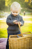Blonde Baby Boy Opening Picnic Basket Outdoors at the Park Stock Photography