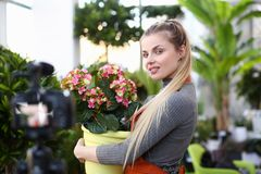 Blonde Blogger Holding Flowerpot with Hydrangea. Beautiful Woman Recording Yellow and Pink Blooming Hortensia in Pot for Plant Blog. Florist Girl Smile to royalty free stock photos
