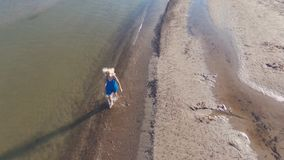 Blonde in a blue dress walks on the water on the beach of the Baltic Sea, early in the morning. Sunny day. Long shadows. Aerial shooting from the drone stock video