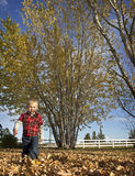 Blonde Boy Waking Through Autumn Leaves Stock Photo