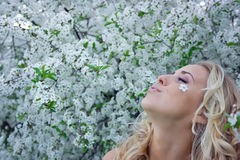Blonde in cherry garden Stock Image