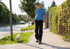 Young blonde boy walks along the street at summer time, with a very young golden retriever puppy dog. stock images