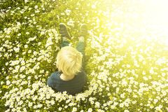 Blonde Child Sitting In A Daisy Flower Meadow royalty free stock photo