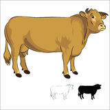 Blonde d'Aquitaine Cow  on white Royalty Free Stock Photo