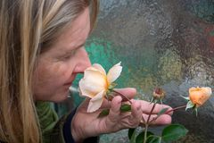 Blonde female gardener in the prime of years, smells satisfied with closed eyes on the scent Aroma red roses flower in the garden royalty free stock image