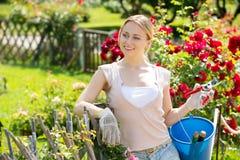Blonde Frau, die um roten Rosenbusch sich kümmert Stockfoto