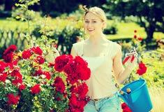 Blonde Frau, die um roten Rosenbusch sich kümmert Lizenzfreie Stockbilder