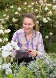 Blonde Frauenschnitte oder -ordnungen der Busch mit secateur im Garten Stockfotografie