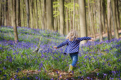 Blonde girl and bluebells at Hallerbos woods. Blonde girl balancing between blooming Bluebells and fresh green leafs on trees in the woods called Hallerbos in stock photography
