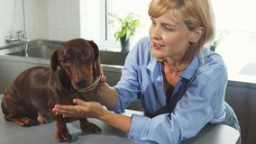 The owner is talking to the dog stock footage