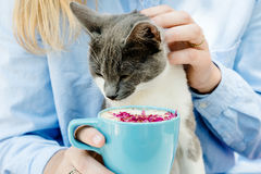 Blonde girl in jeans shirt holding a blue cappuccino cup and play with cat Royalty Free Stock Photo