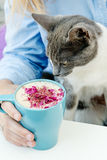 Blonde girl in jeans shirt holding a blue cappuccino cup and play with cute cat during breakfast Royalty Free Stock Photos