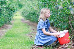 Blonde Girl Picking Blueberries Royalty Free Stock Image