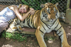 Woman tiger. Smiling blonde tourist woman lying on a adult tiger, Zoo of Chiang Mai, Thailand, Asia Royalty Free Stock Photography