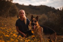 Blonde girl playing with german shepherd dog in a field of yellow flowers stock image