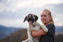 Blonde girl playing with puppy spanish mastiff in a field of yellow flowers stock photo