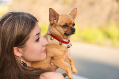 Blonde girl and red chihuahua dog. Royalty Free Stock Images