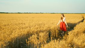 Blonde girl in a red skirt walks over a ripe wheat field at sunset stock video footage