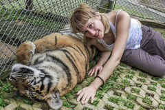 Chiang Mai Zoo. Smiling blonde woman tourist lying on a adult tiger, Zoo of Chiang Mai, Thailand, Asia Royalty Free Stock Photos