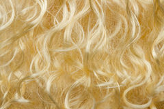 Blonde hair Royalty Free Stock Photography