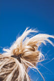 Blonde hair in the sky Stock Image