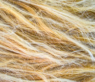 Blonde hair texture Stock Photography