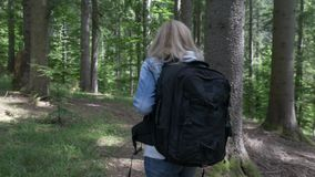 Blonde hiker woman with backpack walking on path of mountain trail woods -. Blonde hiker woman with backpack walking on path of mountain trail woods stock video