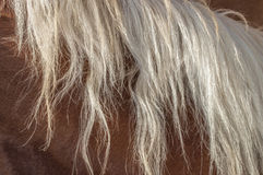 Blonde horse mane Stock Photos