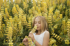 Blonde little girl smelling yellow wildflowers Stock Photos
