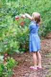 Blonde Mädchen-Sammeln-Blaubeeren Stockfoto