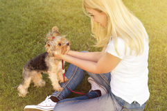 Blonde playing with Yorkshire dog in park Stock Photo